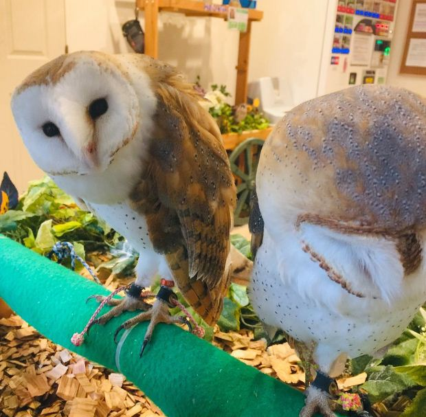 Harajuku Cafe Japan Owl Cafe & Bar Owl Village (1)