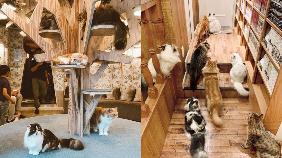 themed Harajuku cafe japan Cat Cafe MoCHA (1)