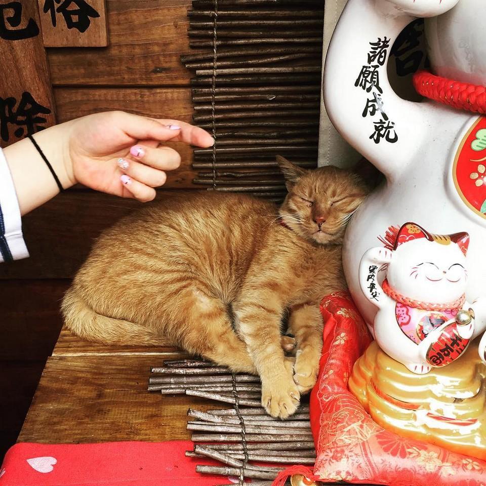 houtong cat village (1)