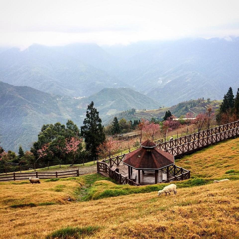 Cingjing Farm (1)