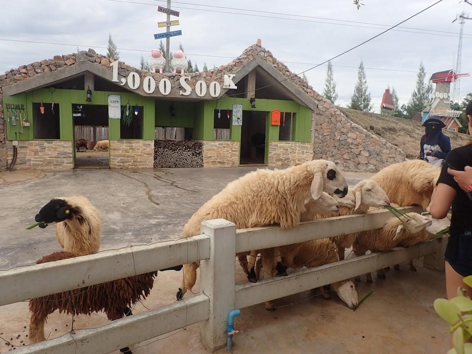 1000 Sook food & Fam (3)