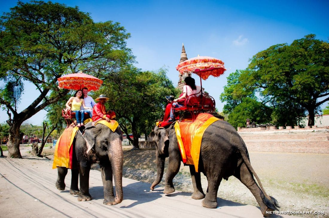 Ayutthaya Elephantstay