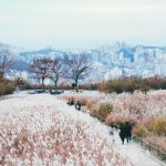 Top Seoul Park — 4 beautiful parks in Seoul & best parks in Seoul Korea you should visit