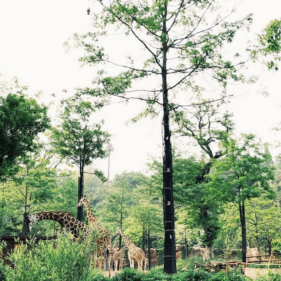 everland zootopia