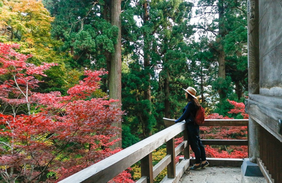 Red leaves in Yamagata