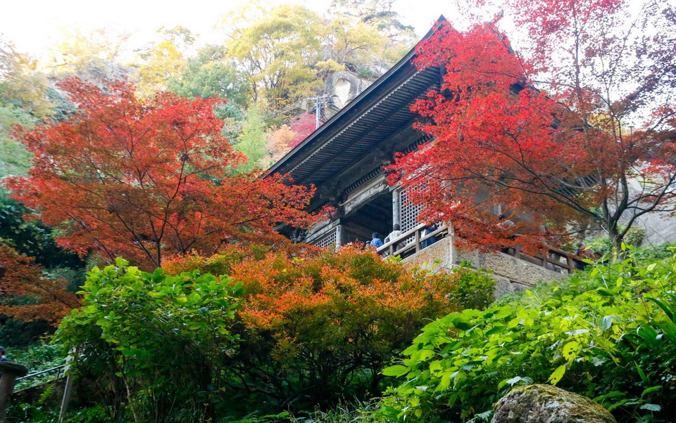 yamagata-leaves-turn-to-red