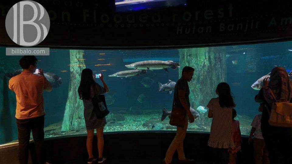 aquaria petronas twin towers kuala lumpur malaysia