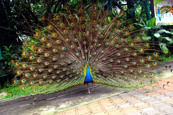 kl-birdpark