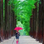 How to get to Nami island from Seoul? — How to go & how to travel to Nami island from Myeongdong?