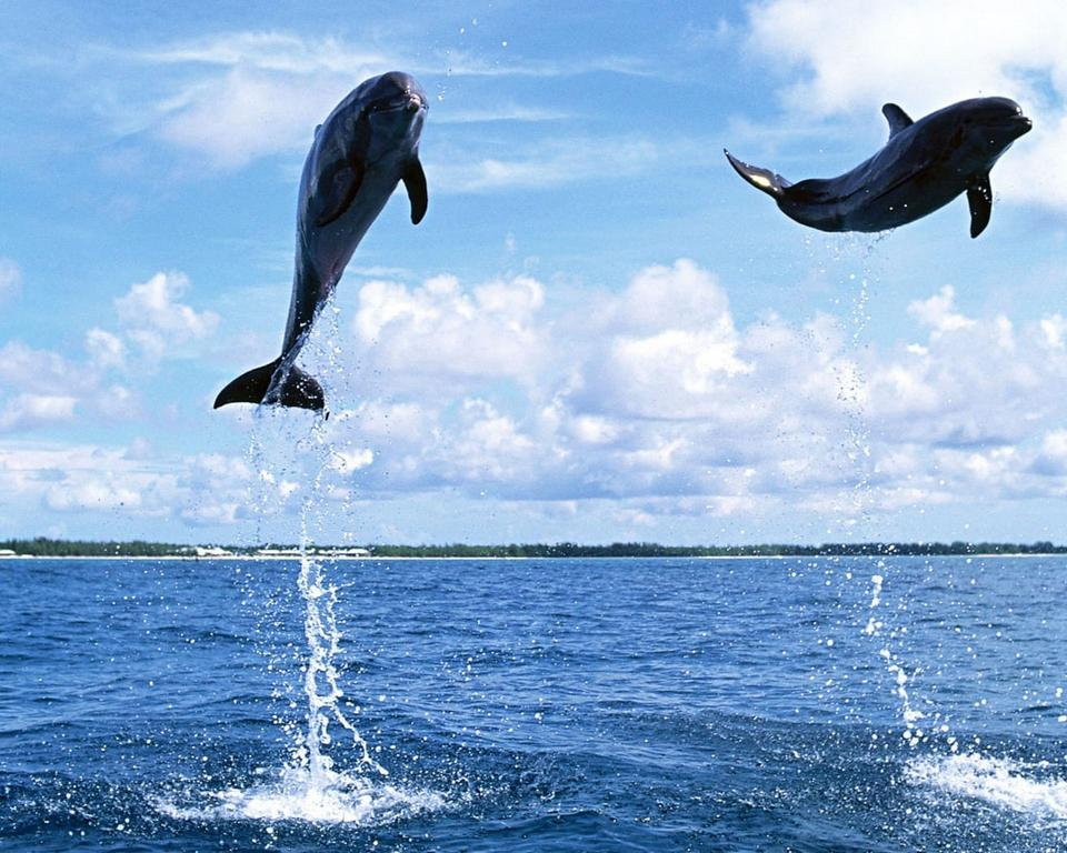 Dolphins leaping up of the water