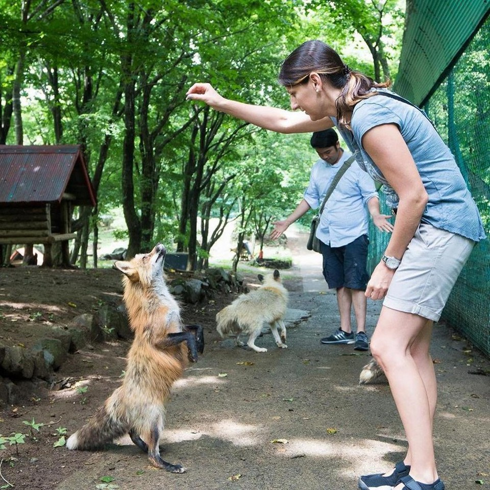 Feeding zao fox