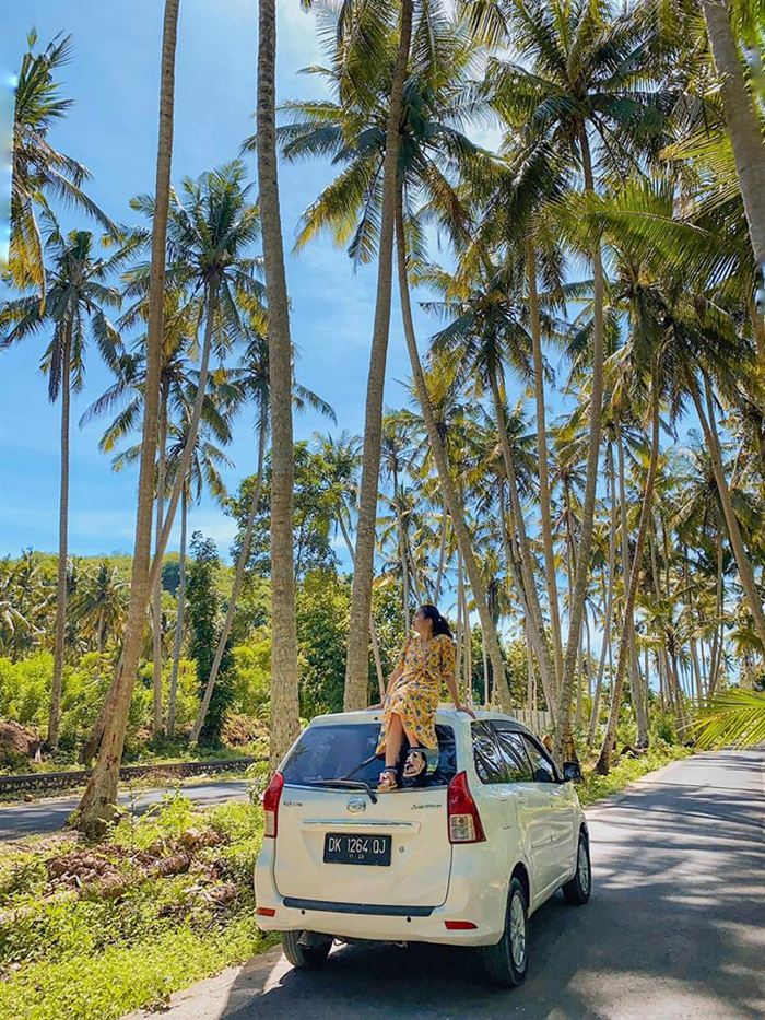 Coconut trees ranges along to the paved roads