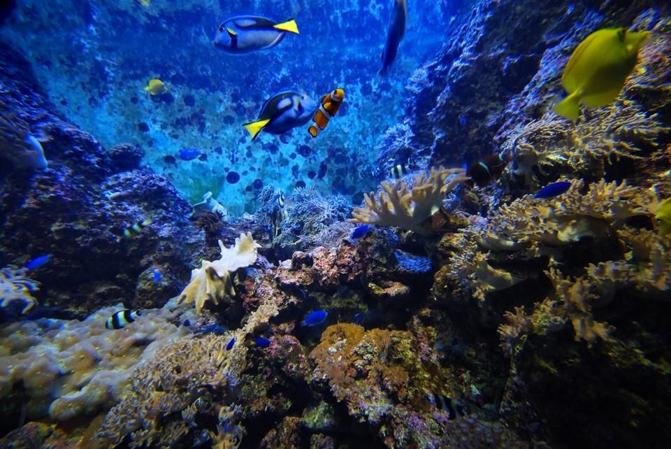 Watching aquarium