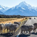 New Zealand travel blog — The fullest New Zealand travel guide for a great budget trip for first-timers